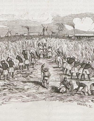 Esclaves au champ